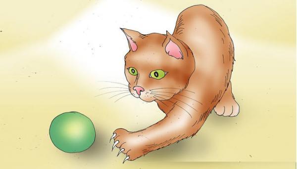 معرفی 11 وسیله برای بازی گربه خانگی